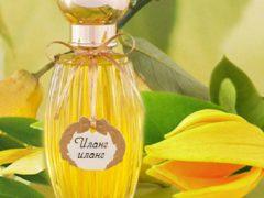 Эфирное масло иланг-иланг: удивительные свойства и волшебный эффект от применения