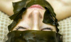 Маски для лица из ламинарии: восстановление кожи водорослями